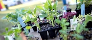 Easy way to propagate and grow your own plants