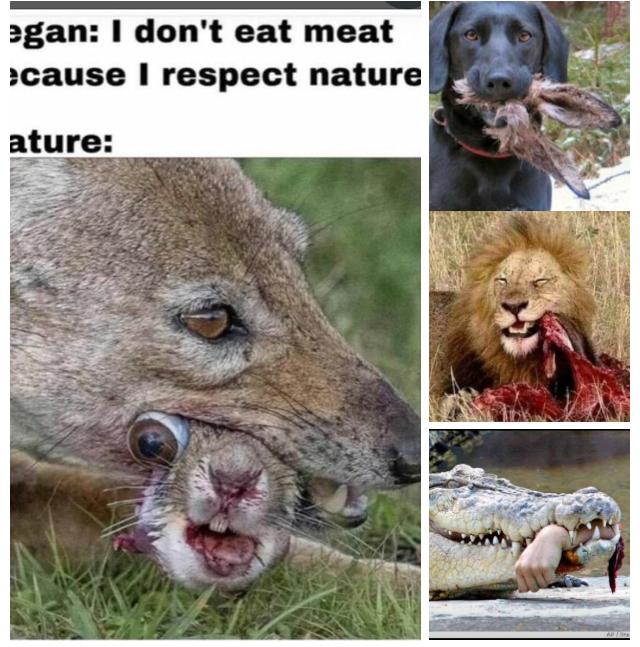 Vegans?