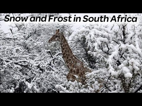 Snow and Frost in South Africa | The cold snap broke 19 temperature records in a day. Kimberley