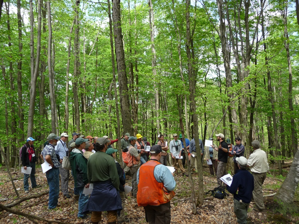 Don't Miss The Bird-friendly Forestry Webinars to Support New England Birds