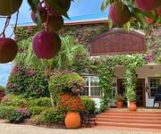 Mango Fruit Office Chabil Mar Resort Belize