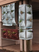 *Permaculture Vancouver July Meetup - Hands-on Drip Irrigation and Vertical Gardening workshop