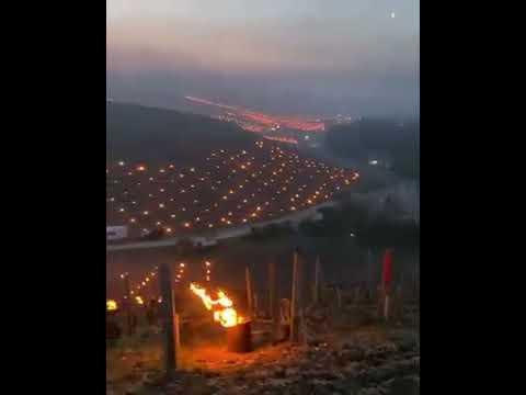 Rio Grande do Sul, Brazil: Desperate Grape Farmers Tries to Save Vine Stocks From Freezing Temperat…