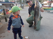 Grandson sizing up his dad's fish