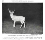 NGM 1921-08 Pic 06