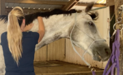 Bonnie and Hawk Working on Neck Release