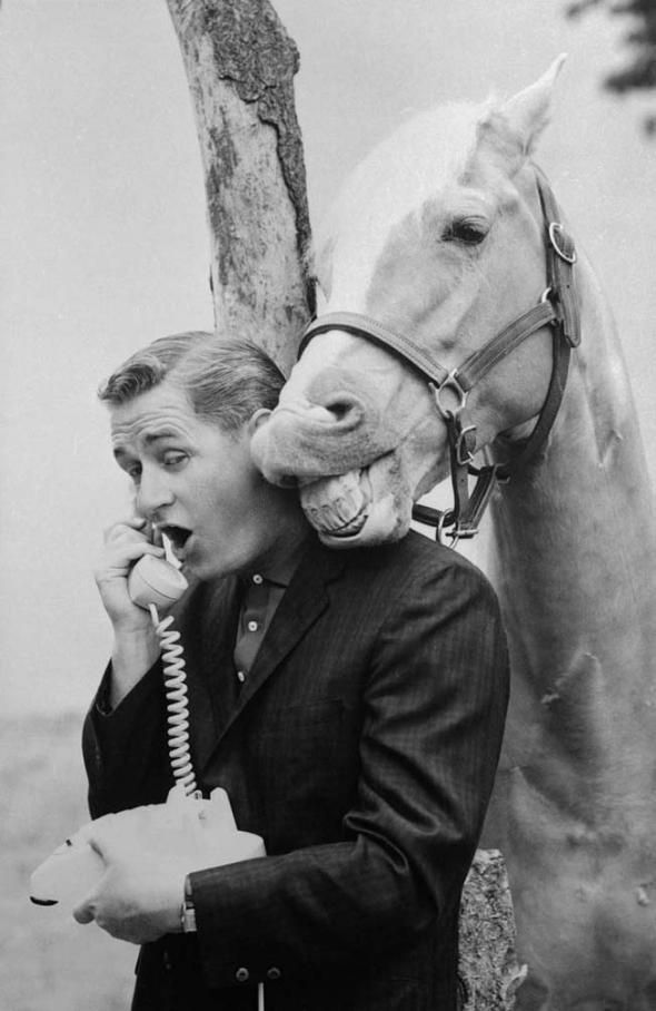 (Mister Ed, the talking horse from the TV show, listening to a phone call)