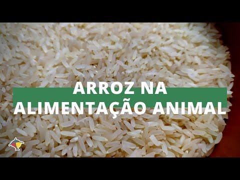 Pesquisa mostra que arroz pode substituir milho na alimentação animal   Programa Terra Sul