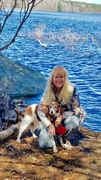 My Rescue Bailey a Brittany Spaniel