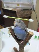 He Believes He's Well Balanced