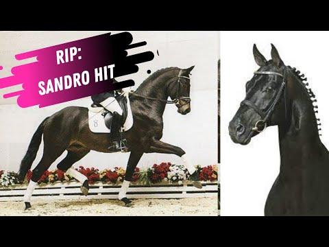In Memory Of The Legendary Stallion Sandro Hit