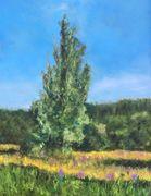 Poplar tree Robertstown