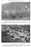 NGM 1921-09 Pic 08