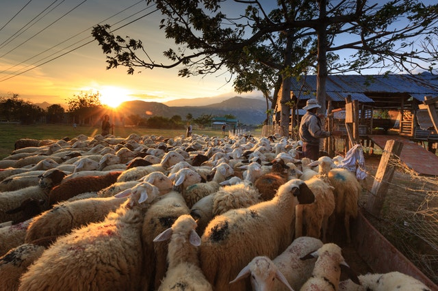 Daily Devotional: Christ desires to Shepherd each one in the hard stuff of life