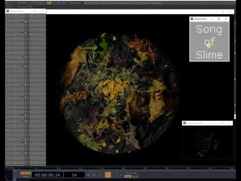 Slime Mold Timelapse- Sonification Test 1 - T