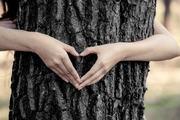 love arbre