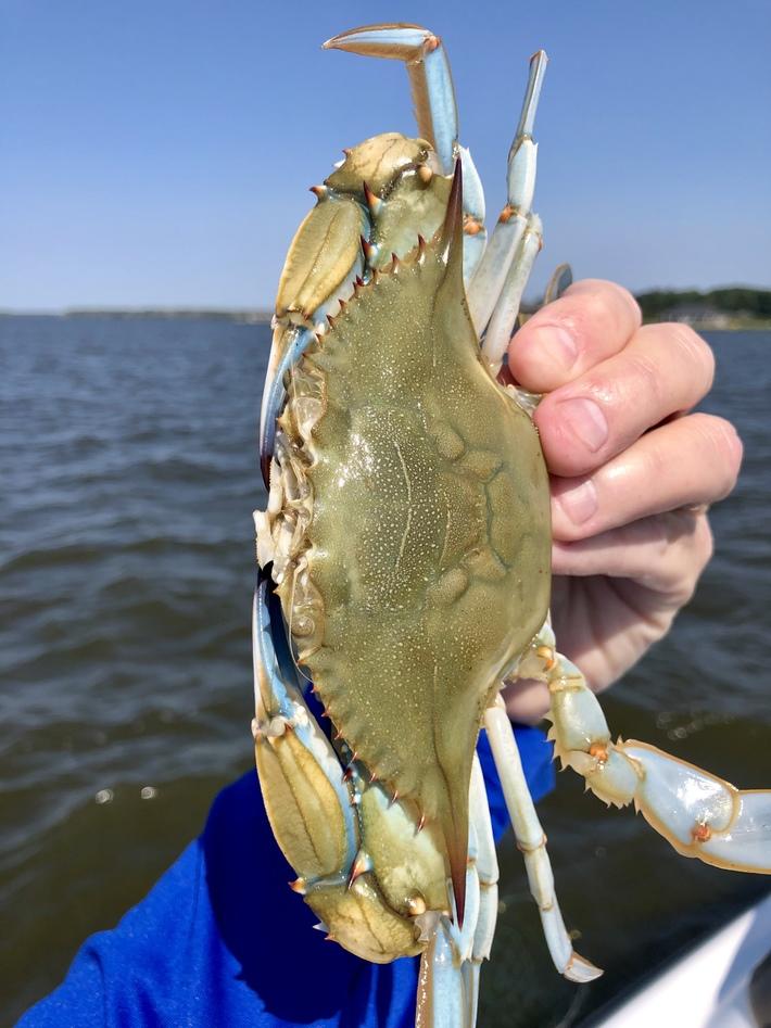 Nice Jimmy Crab…..