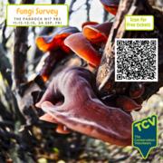 Free Fungi Survey Workshop - TCV The Paddock