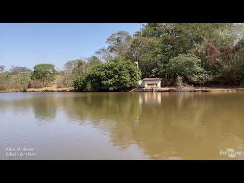 Sistemas de ILPF promovem serviços ambientais