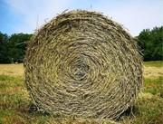 Forage Focus - Improving alfalfa quality - Dr. Kim Cassida
