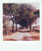 Strada di campagna salentina