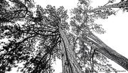 L arbre main