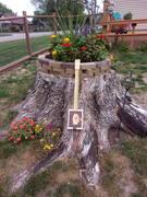 Linda's stump garden