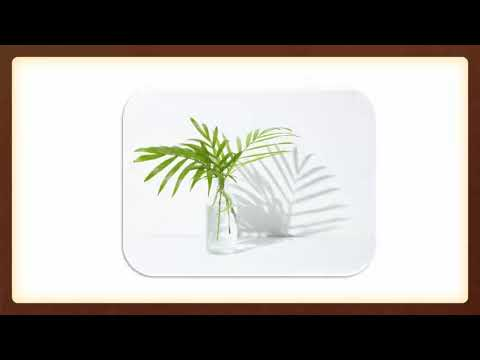 Shopping Online For The Ideal Plant