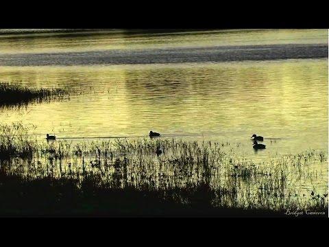 GOLDEN EVENING-Relaxing music-Bridget Cameron