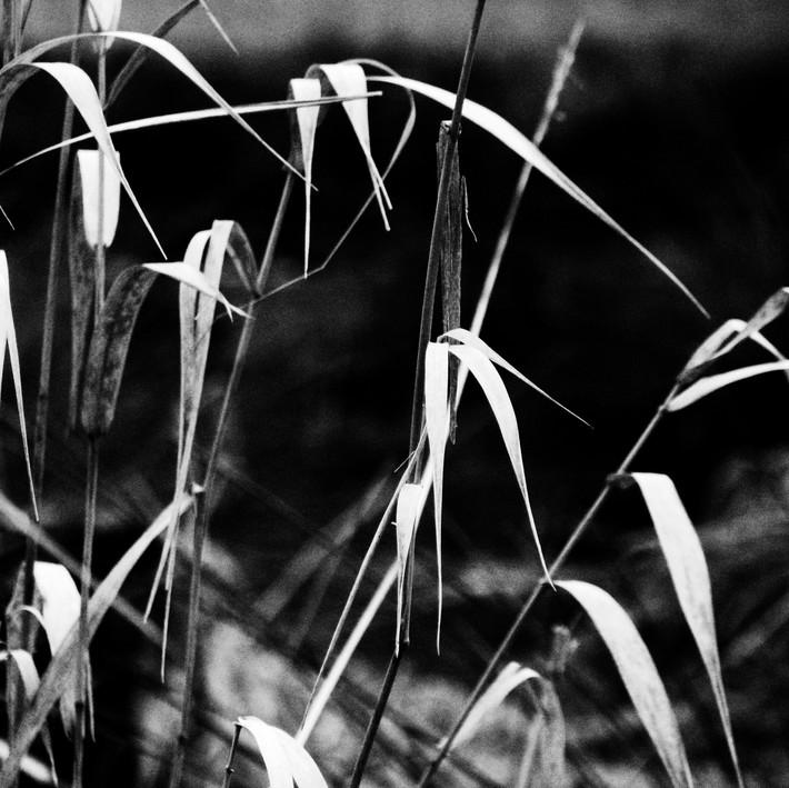 second grass shot