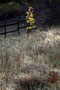 Grass 11