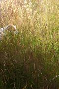 Grass 14
