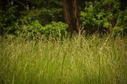 tall grass in the field