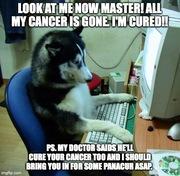 cancer dog