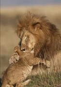 King and the Prince