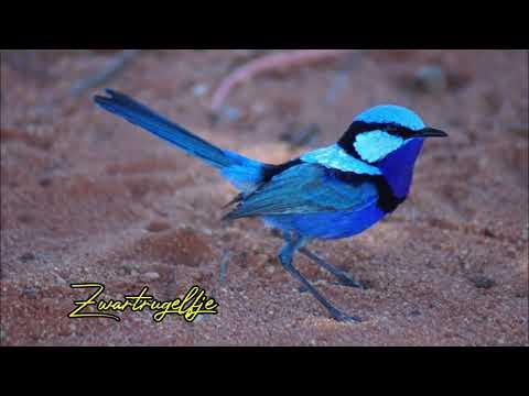 Little Bird                     A.   D.   Eker          2021