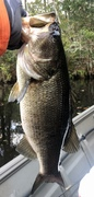 Another Bass Just under Five Pounds……10/23/2021