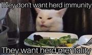 Have you herd the cat--tled words