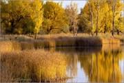Pondside Autumn