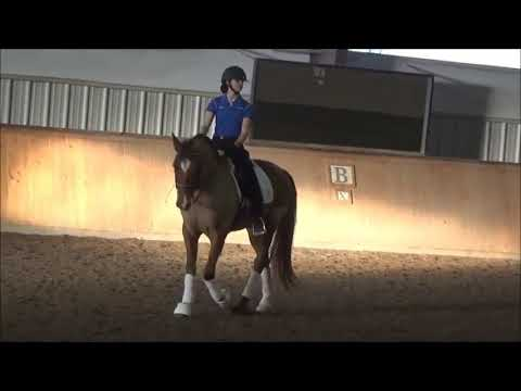 Jeremy Steinberg: The Challenge Of Riding PRE Horses In Dressage