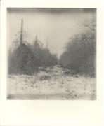 Abandoned field - 1