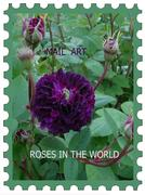 PROJECT MAIL ART INTERNATIONAL ROSES IN THE WORLD